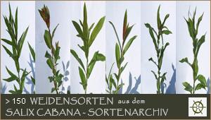 Weidenshop Cabana Weidenkunst Weidengut Weidenprodukte